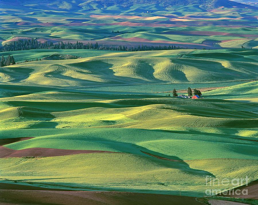 Contour Farming Photograph