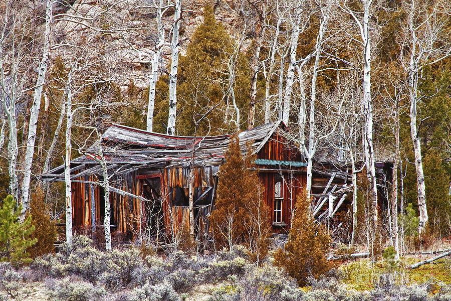 Cool Colorado Rural Rustic Rundown Rocky Mountain Cabin  Photograph