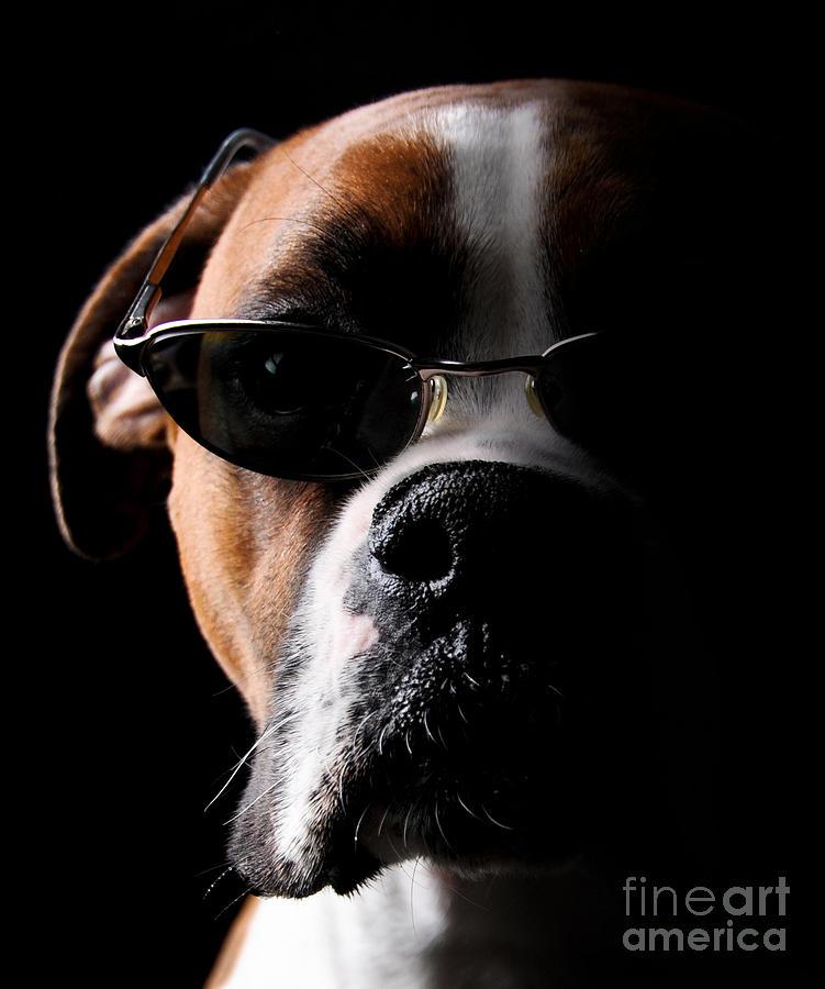 Cool Dog Photograph