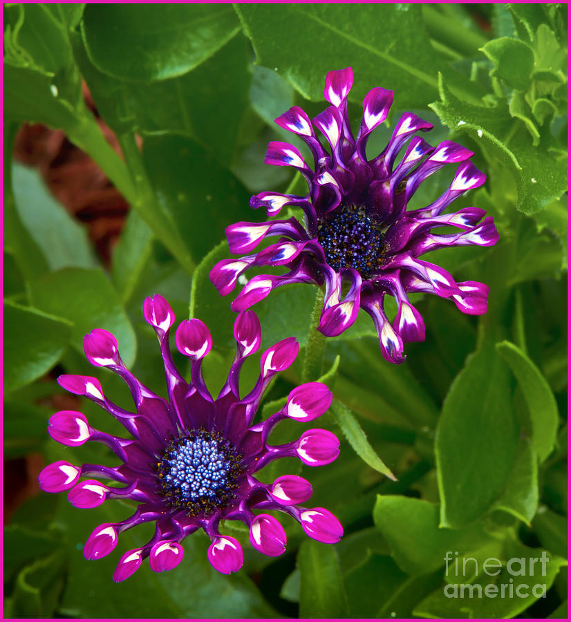 Cool Flowers Photograph