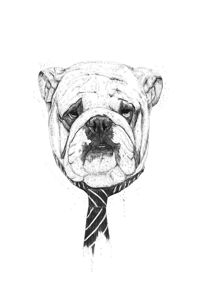 Cooldog Drawing