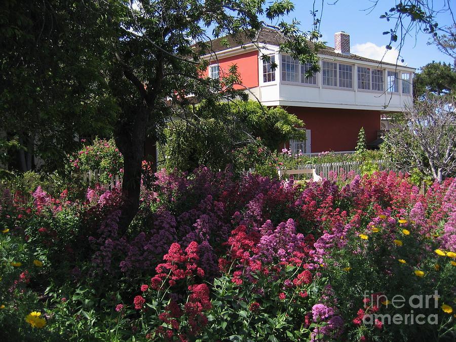 Cooper-molera Garden Photograph
