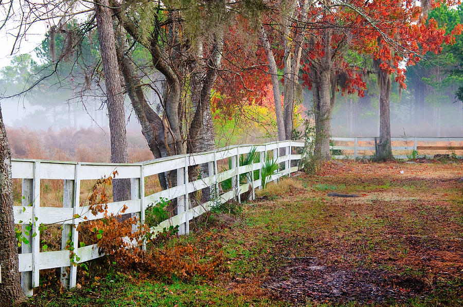Coosaw Horse Fence Photograph