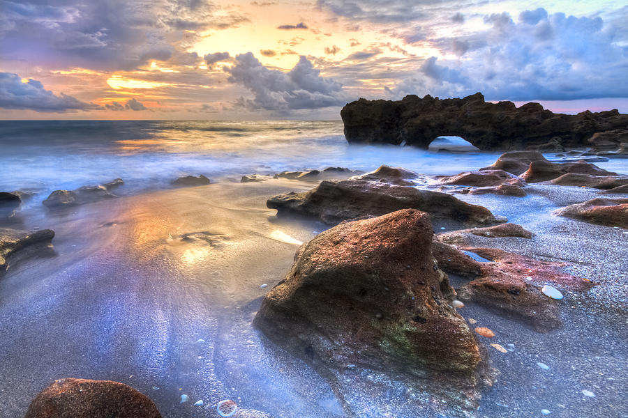 Blowing Photograph - Coral Garden by Debra and Dave Vanderlaan