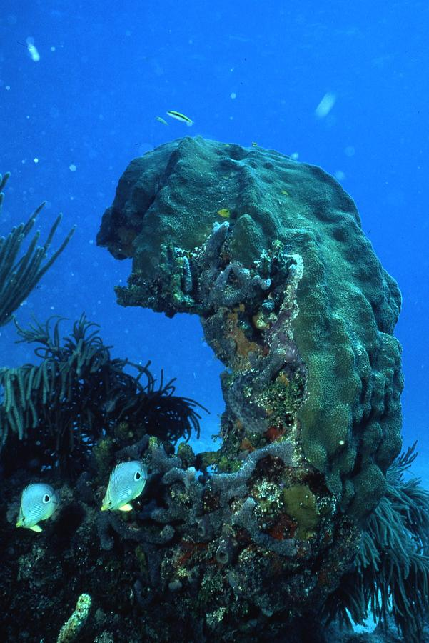 Coral In The Gulf Of Mexico Photograph