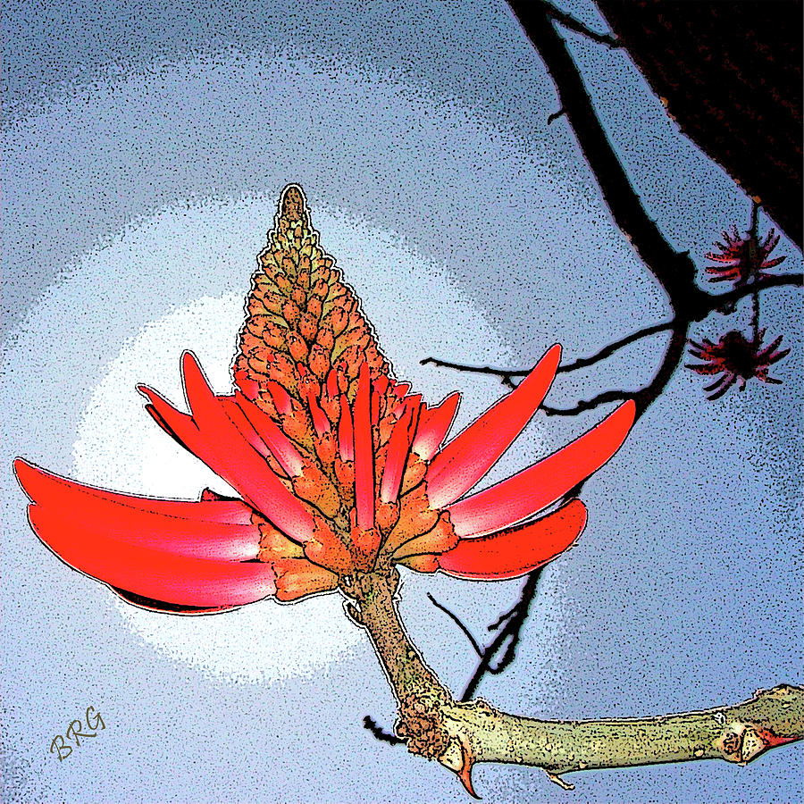 Coral Tree Photograph
