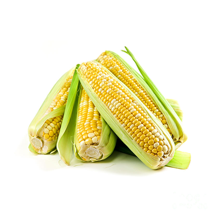 Corn Ears On White Background Photograph
