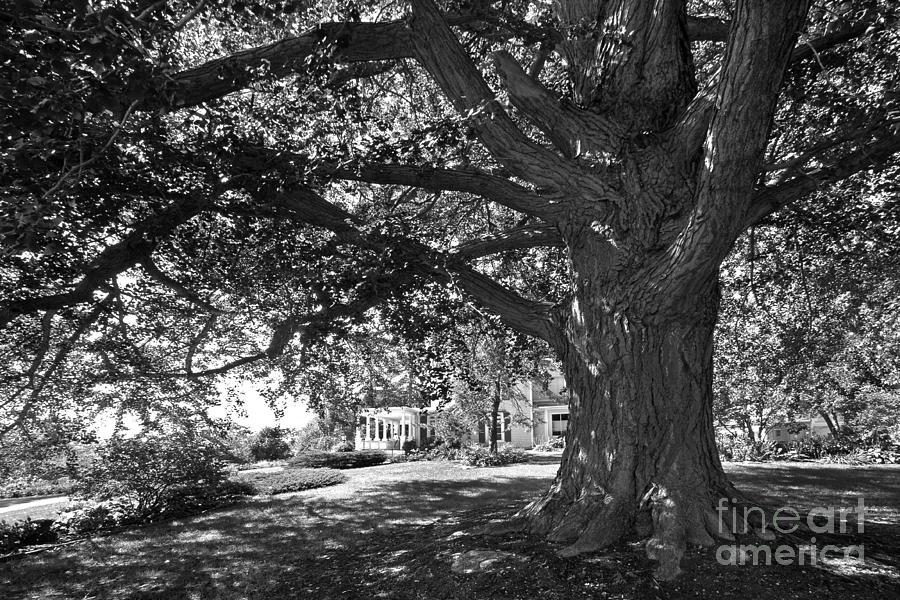 Cornell College Landscape Photograph