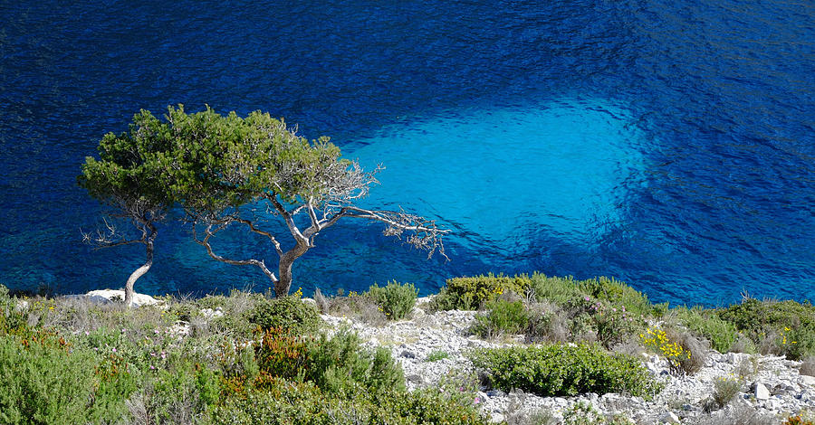 Pine Trees At Azure Waters Photograph