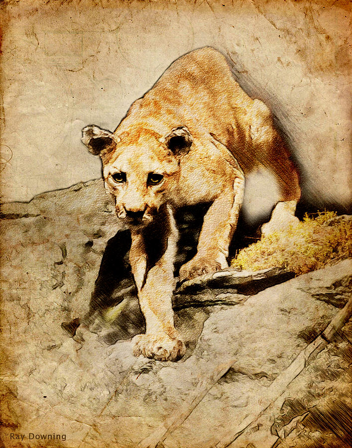 Cougar Hunting Digital Art  - Cougar Hunting Fine Art Print