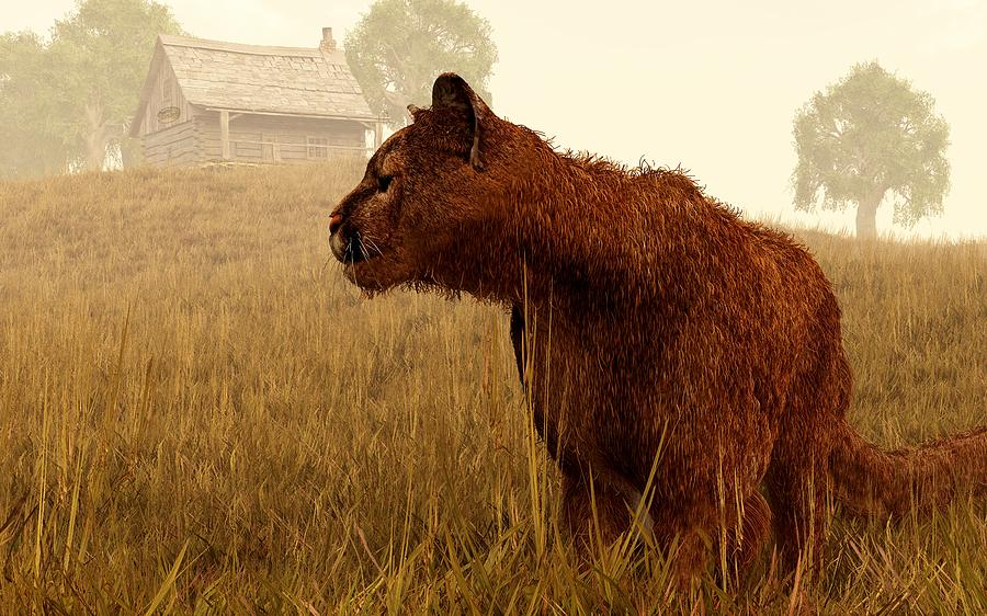 Cougar In A Field Digital Art