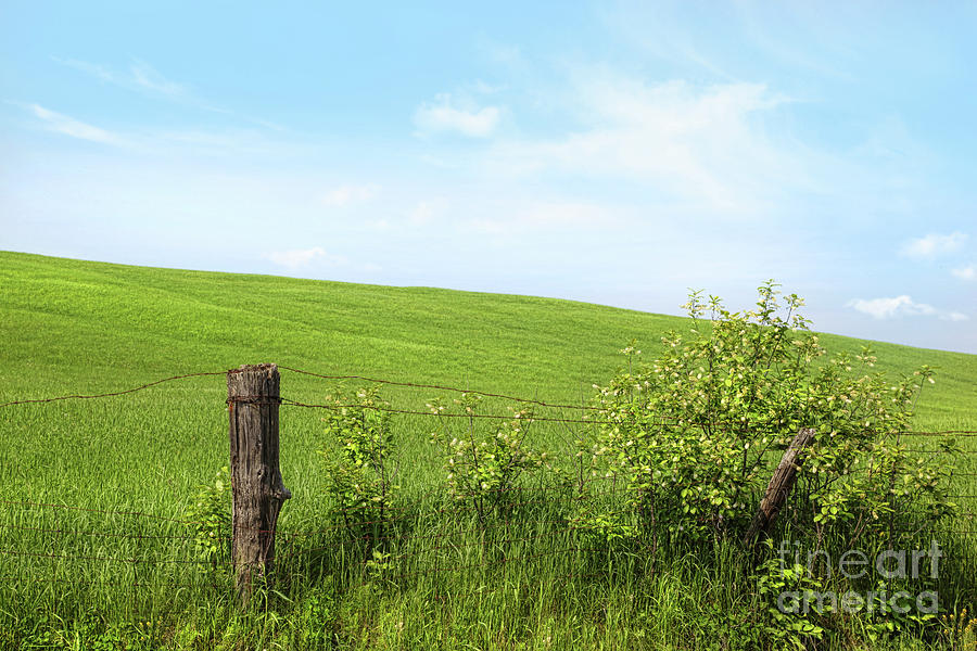 Country Fence With Flowers With Blue Sky Photograph