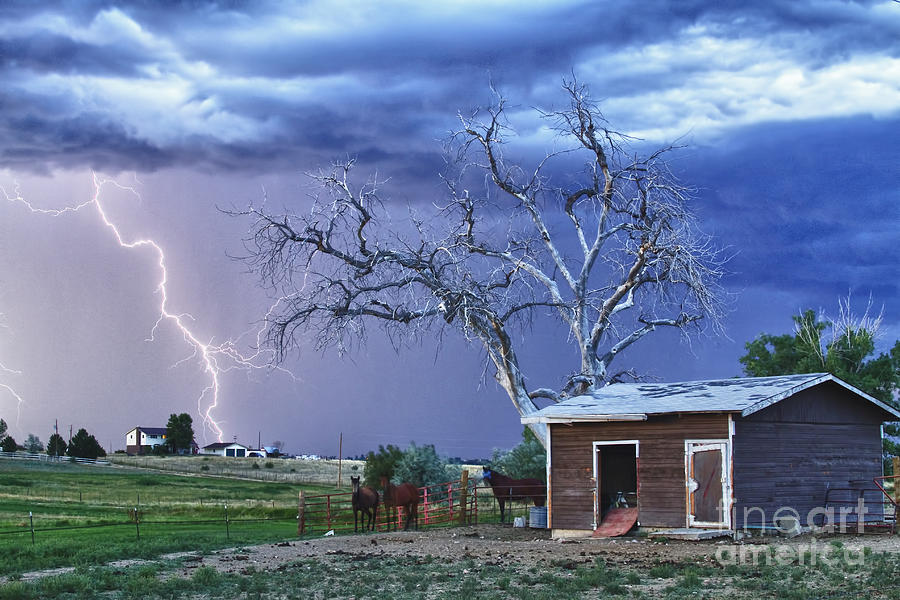 Country Horses Lightning Storm Ne Boulder County Co Hdr Photograph  - Country Horses Lightning Storm Ne Boulder County Co Hdr Fine Art Print