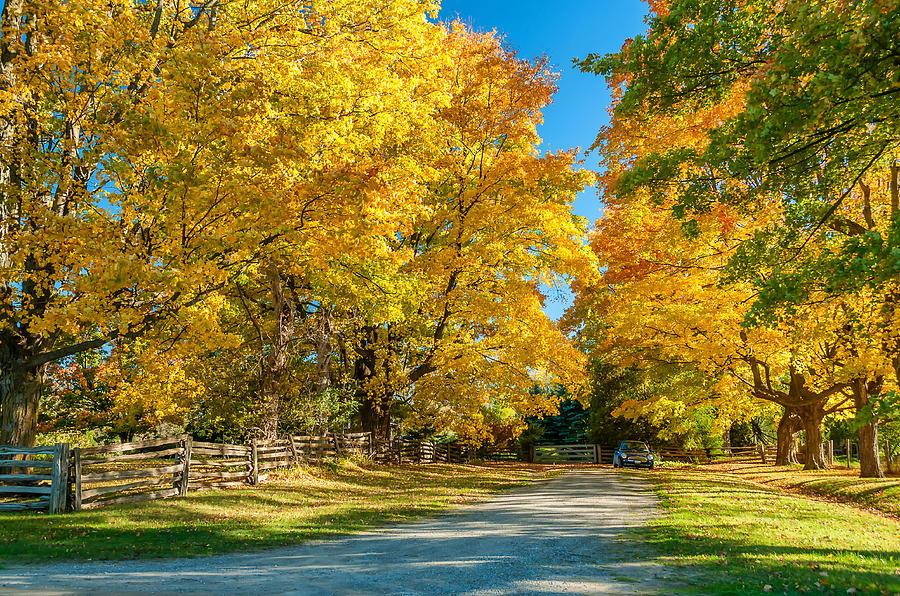 Ontario Photograph - Country Lane by Steve Harrington