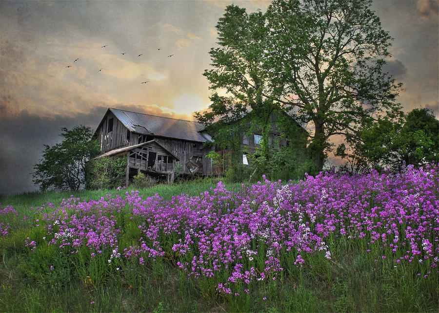 Country Living Photograph By Lori Deiter