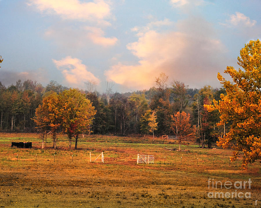 Country Morning Photograph