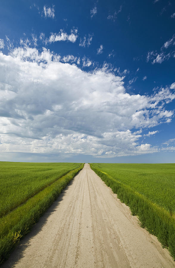 Country Road Through Grain Fields Photograph