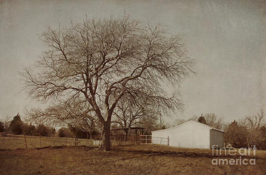 Countryside Photograph  - Countryside Fine Art Print