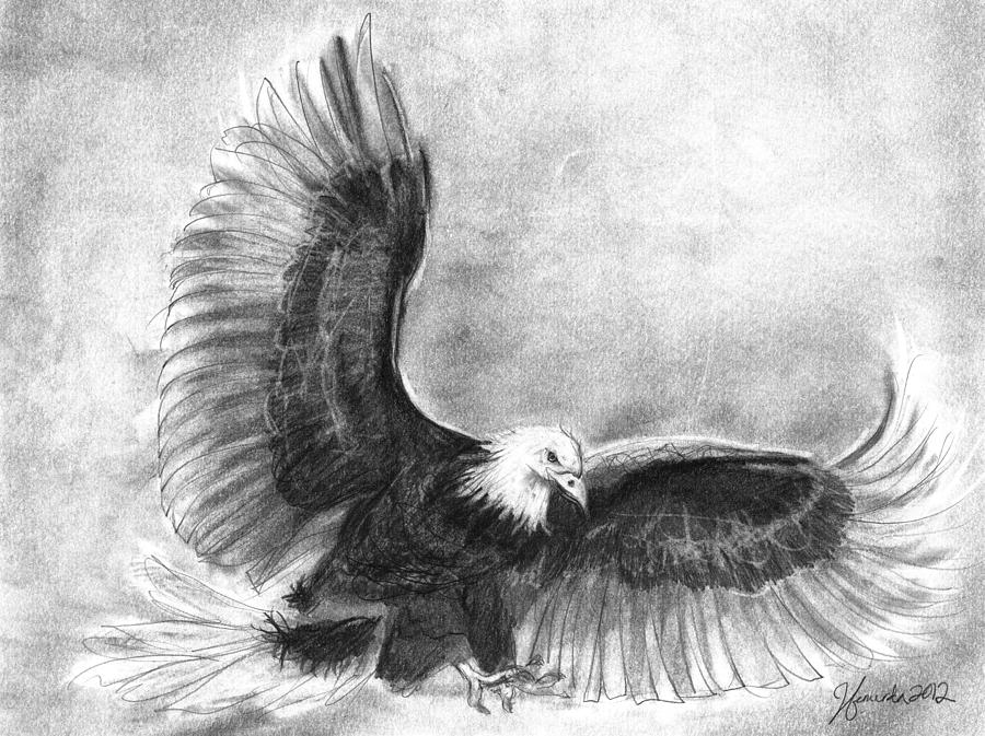 Bald eagle in flight drawing