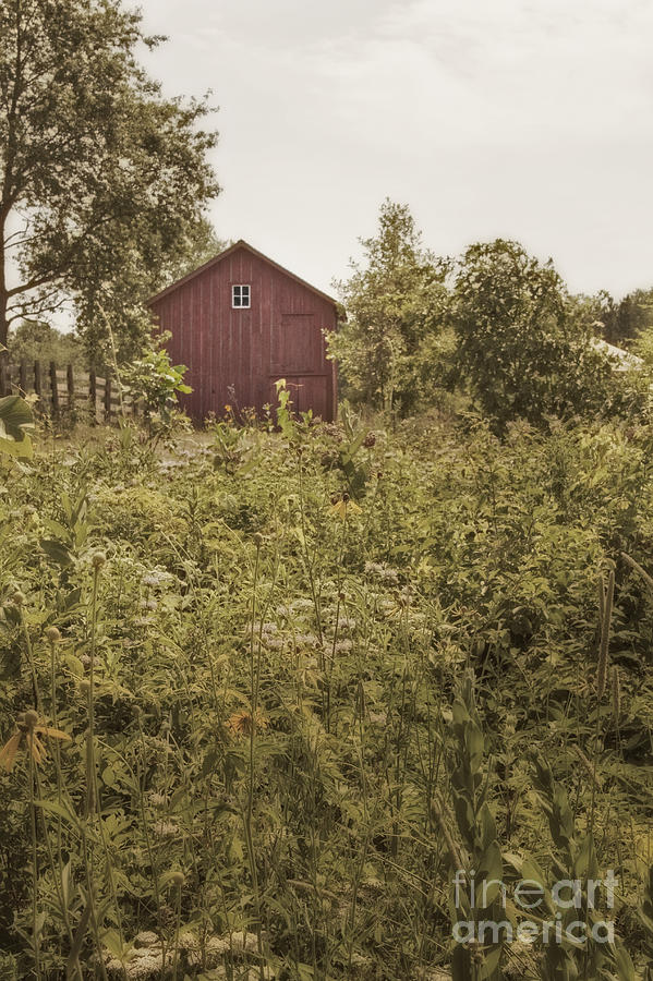 Old; Farm; Barn; Rural; Landscape; Outside; Outdoors; Roof; Small; Country; Countryside; Field; Red; Painted; Wood; Window; Wooden; Weeds; Grasses; Fence Photograph - Covered Barn by Margie Hurwich
