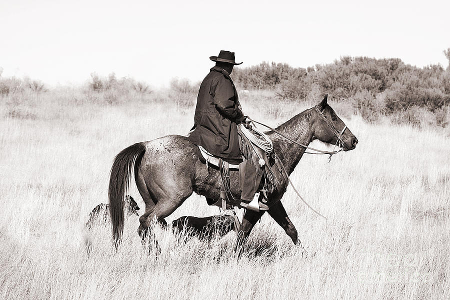 Cowboy And Dogs Photograph