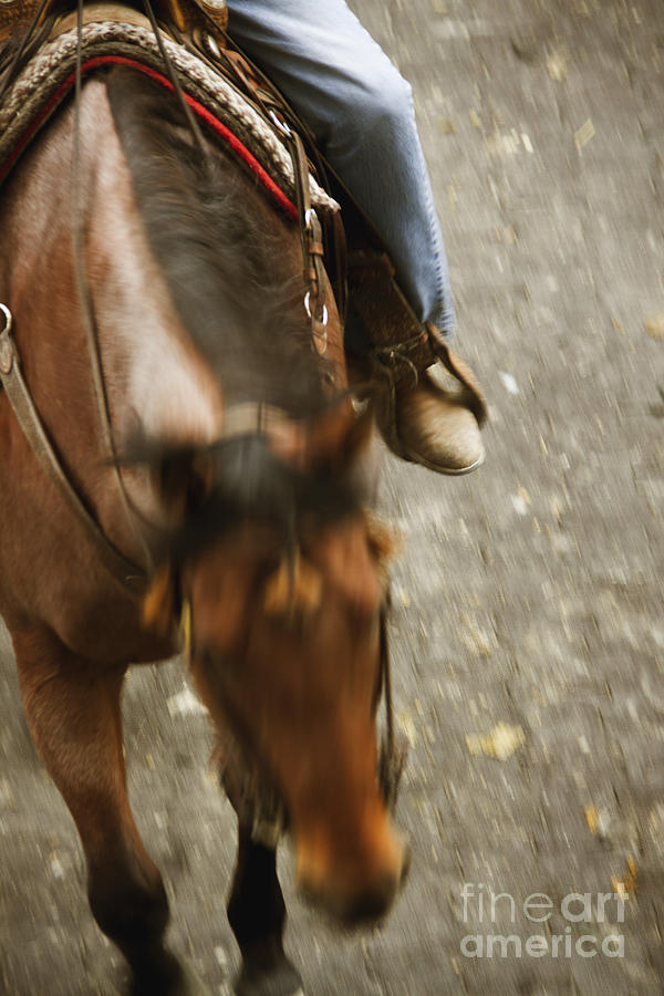 Cowboy Photograph