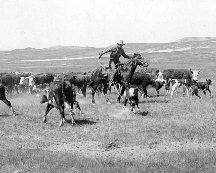 Cowboy Western Cattle Drive Vintage Photograph