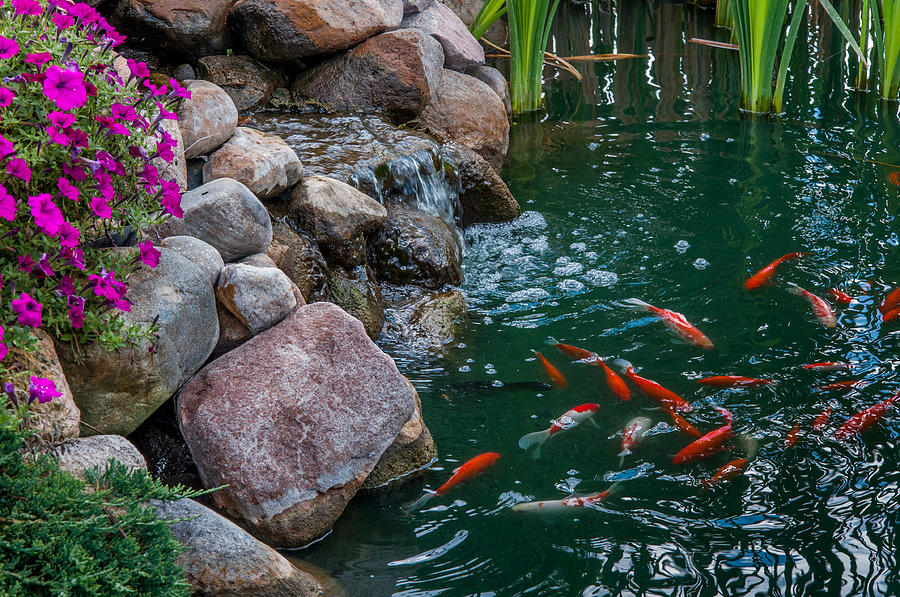 koi pond ii photograph by gene sherrill