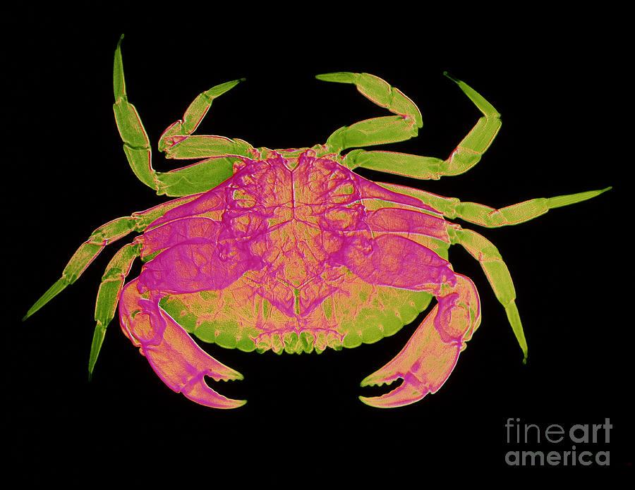 Crab Photograph
