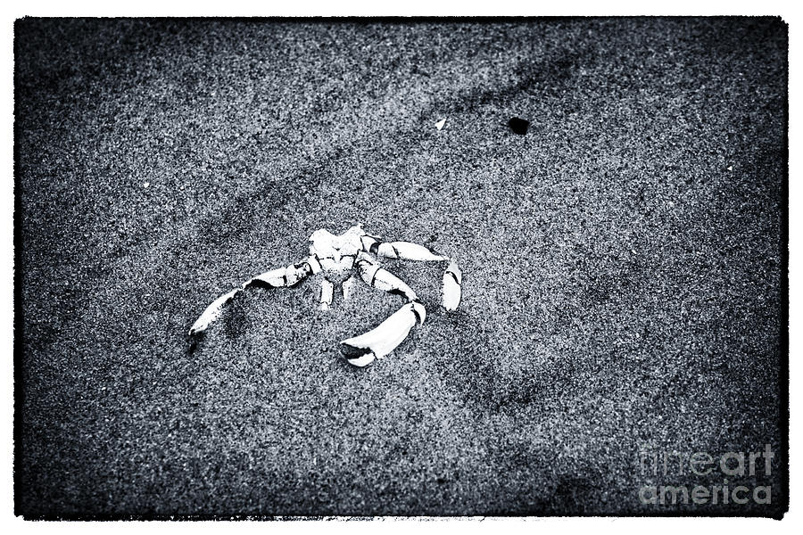 Crab In The Sand Photograph