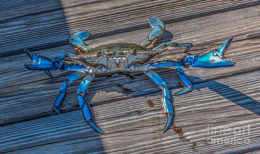 Crab Legs Photograph