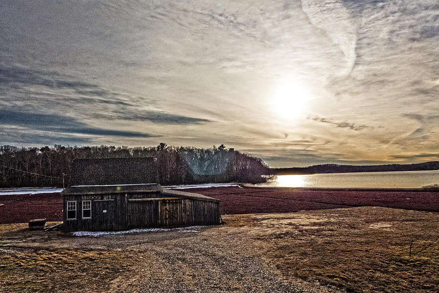 Sandwich Photograph - Cranberry Bog Winter Of 2012 by Frank Winters