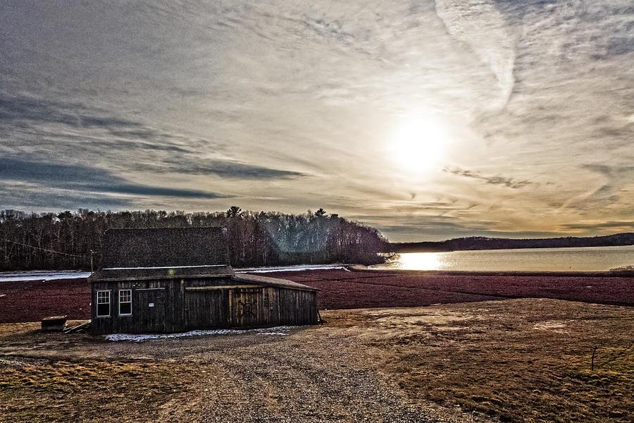 Cranberry Bog Winter Of 2012 Photograph