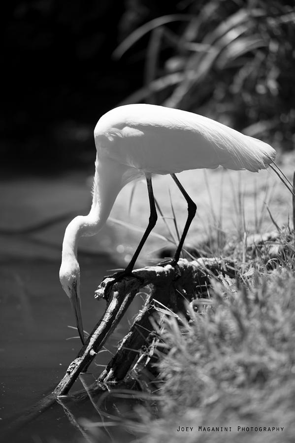 Photograph - Crane by Joey  Maganini