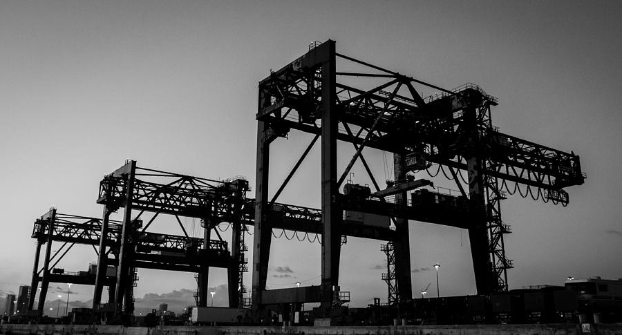 Cranes Pyrography - Cranes by Julian Sula