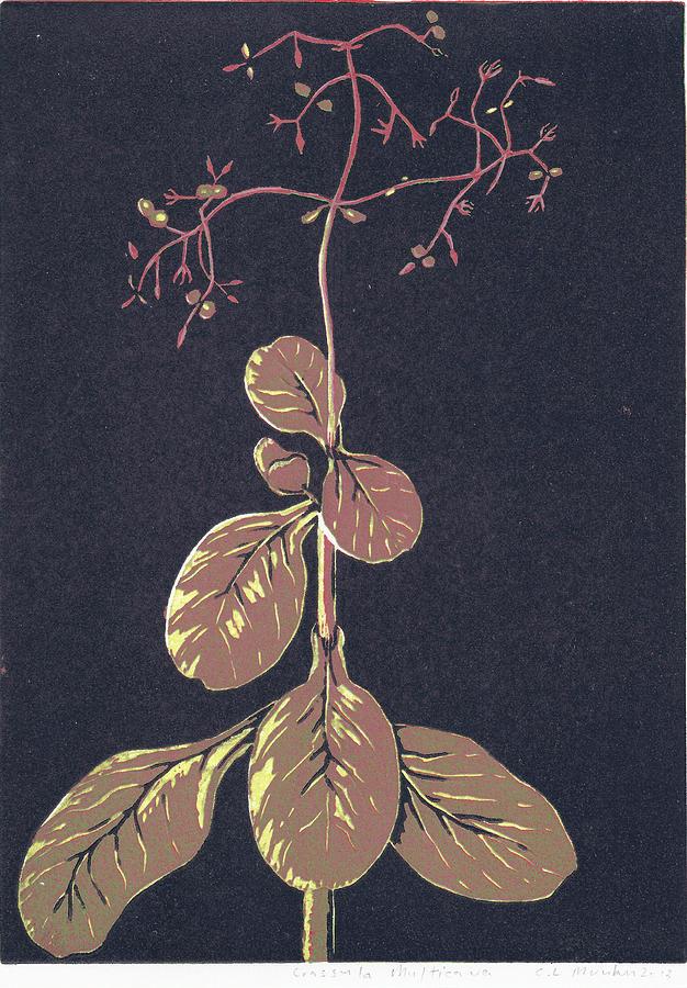 Botanical Colour Print Painting - Crassula Multica Va by C L Mvuku