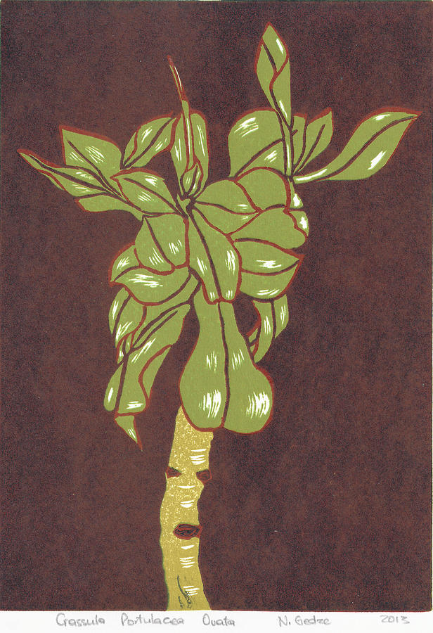 Modern Botanical Prints Painting - Crassula Portulacea Quata by N Gedze