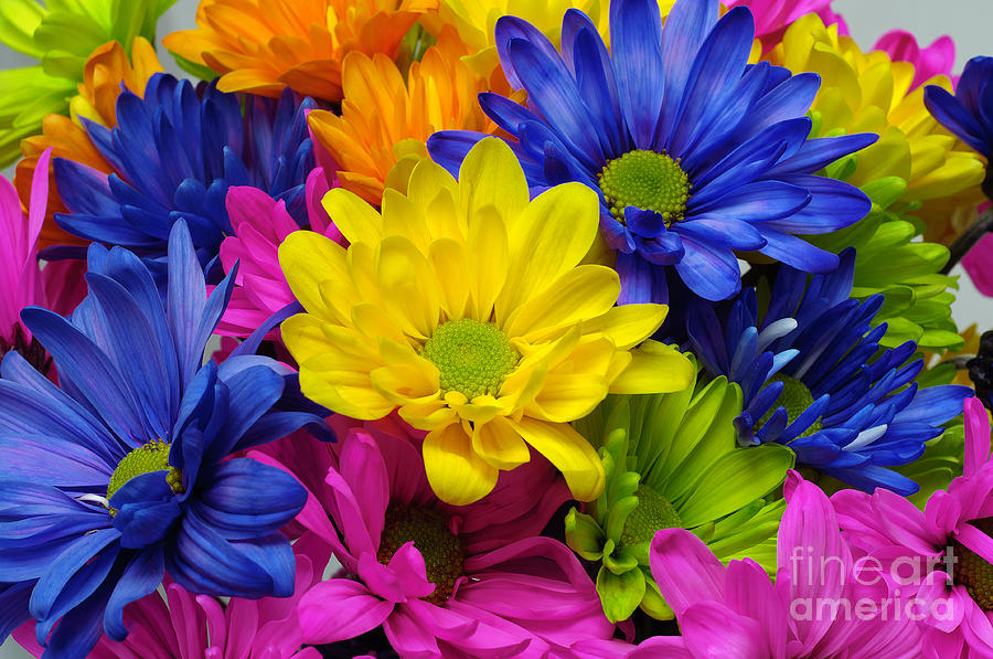 Colorful Crazy Daisies 3 Photograph By Andee Design