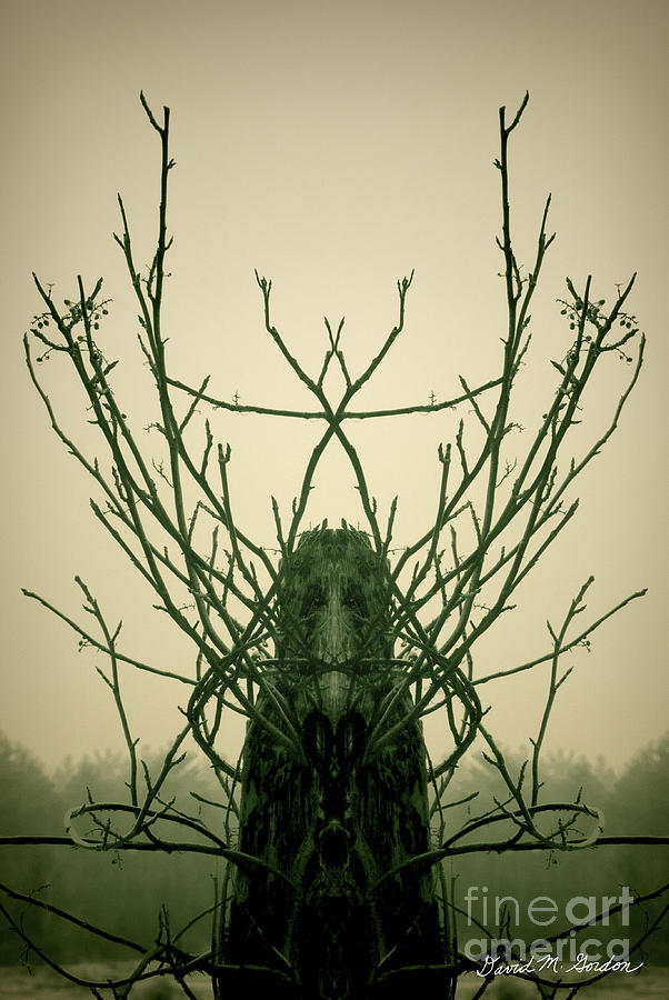 Creature Of The Wood Photograph  - Creature Of The Wood Fine Art Print