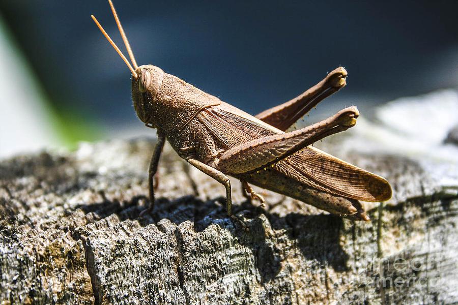 Cricket  Photograph