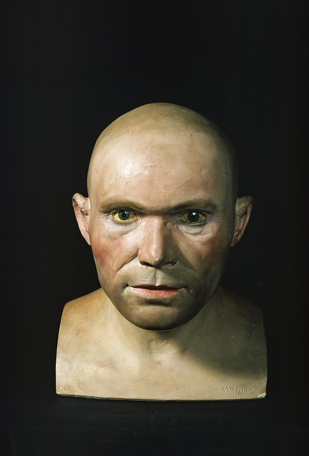 Cro-magnon Man Reconstructed Head Photograph