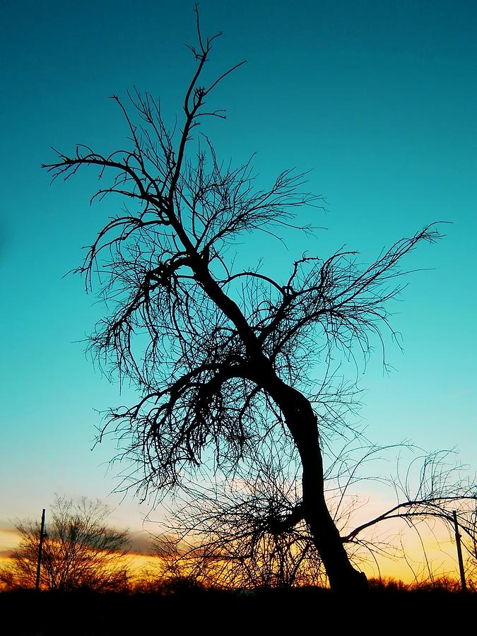 Crooked Sunset Silhouette Photograph  - Crooked Sunset Silhouette Fine Art Print