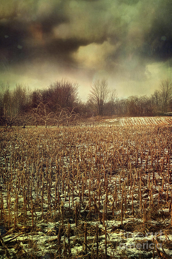 Crop Field In Early Winter After First Snow Photograph