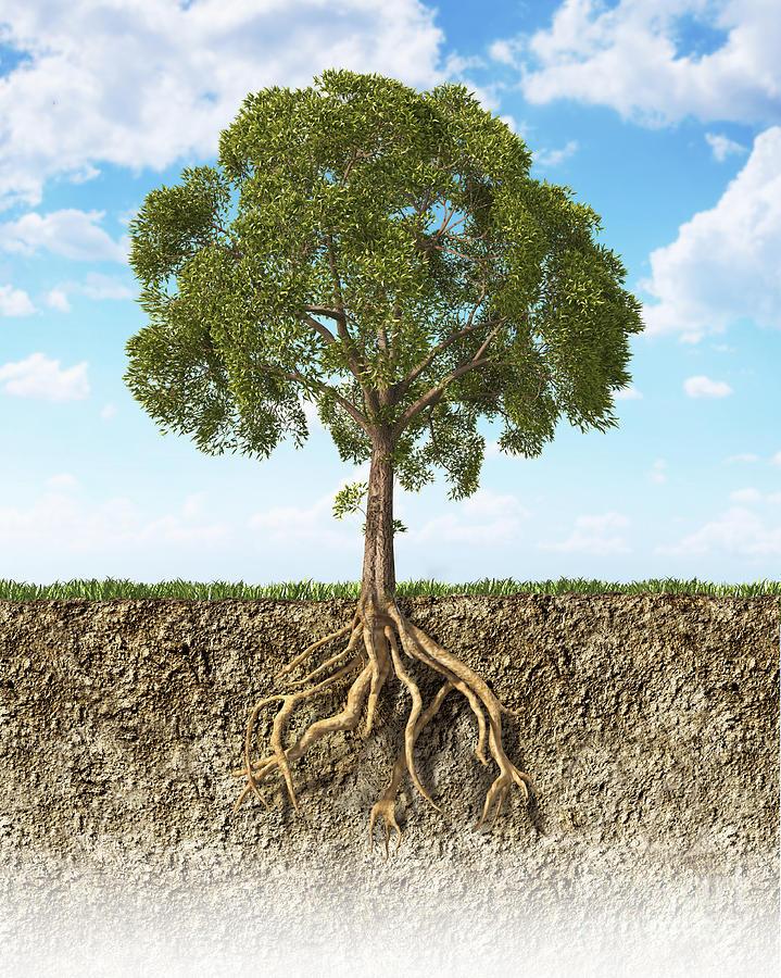 Cross Section Of Soil Showing A Tree Digital Art