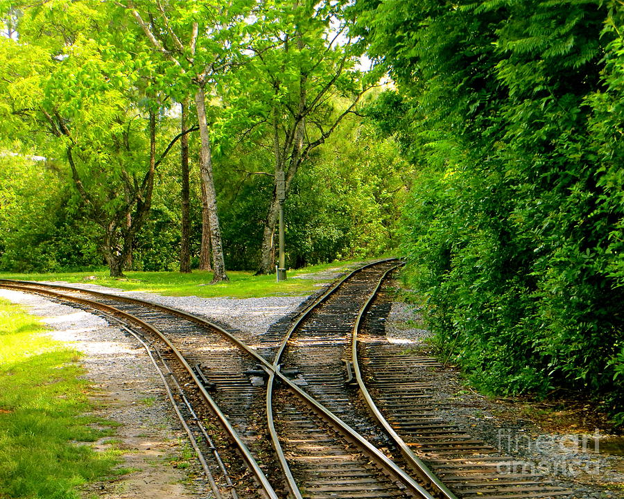 Railroads Photograph - Crossing The Lines by Joy Hardee