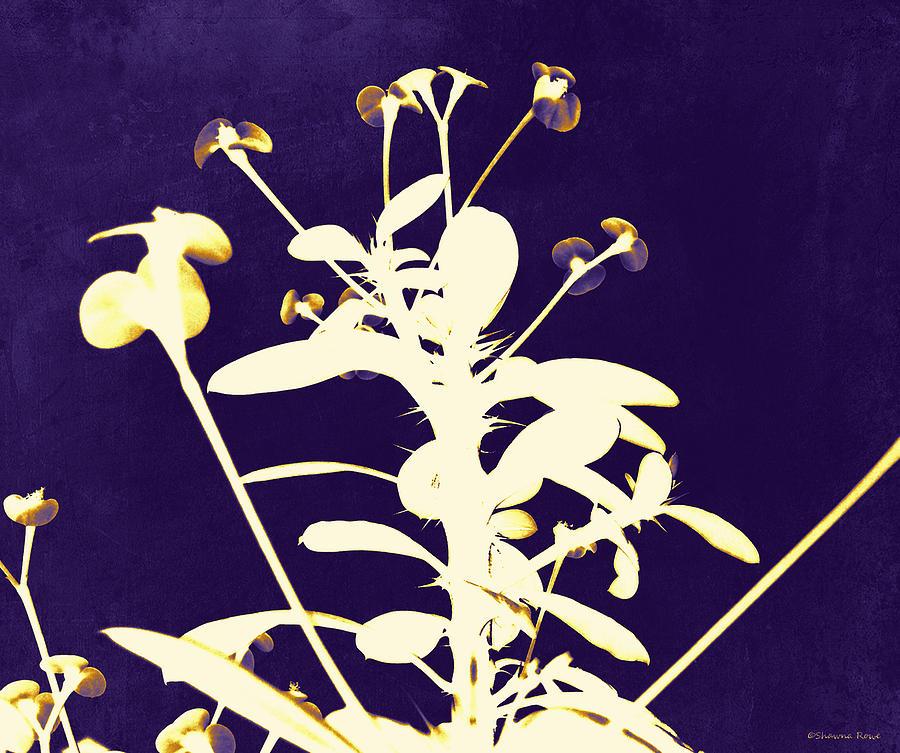 Crown Of Thorns - Indigo Photograph
