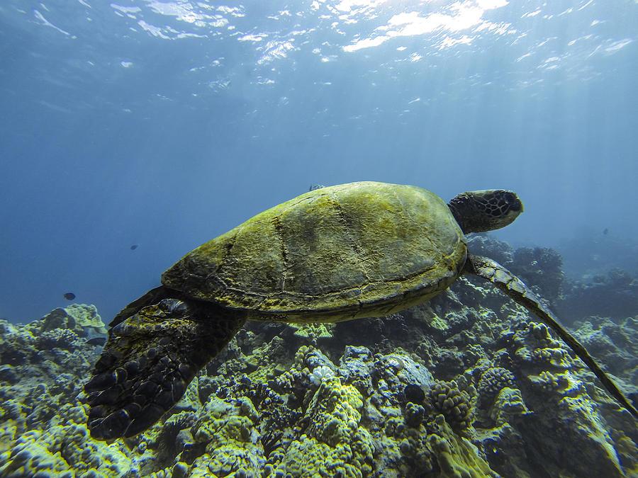 Cruising The Reef Photograph