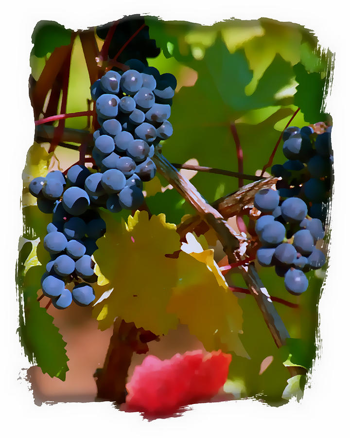 Wine Grapes Digital Art - Crush Me Now II by Ken Evans
