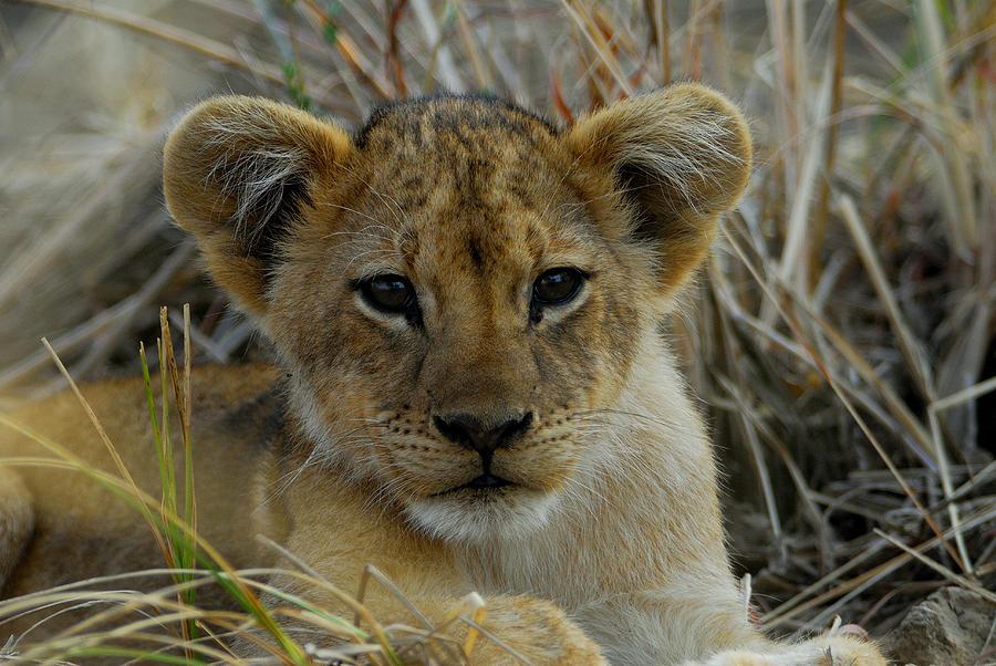 Cub Photograph