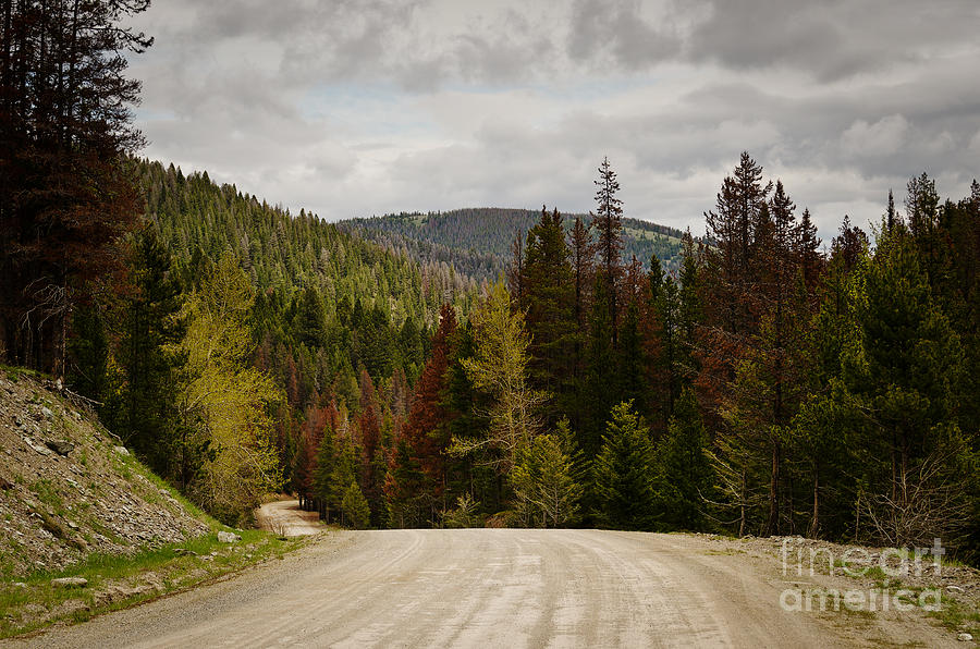 Curviing Dirt Road Photograph  - Curviing Dirt Road Fine Art Print